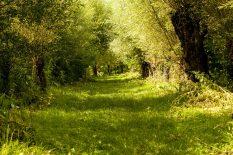 wandelen nationaal park biesbosch