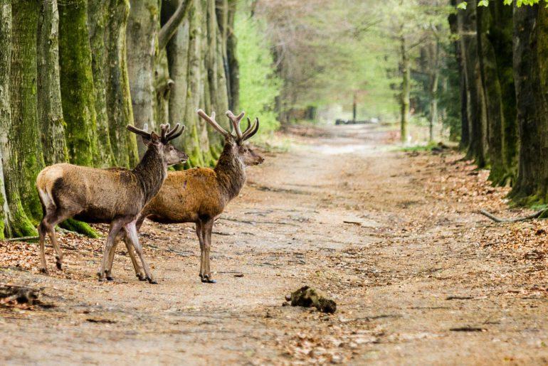 Weekendje wandelen op de Veluwe