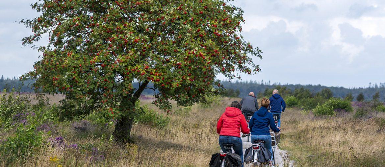 fietsvakantie door de drentse aa