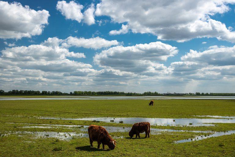 weekendje biesbosch