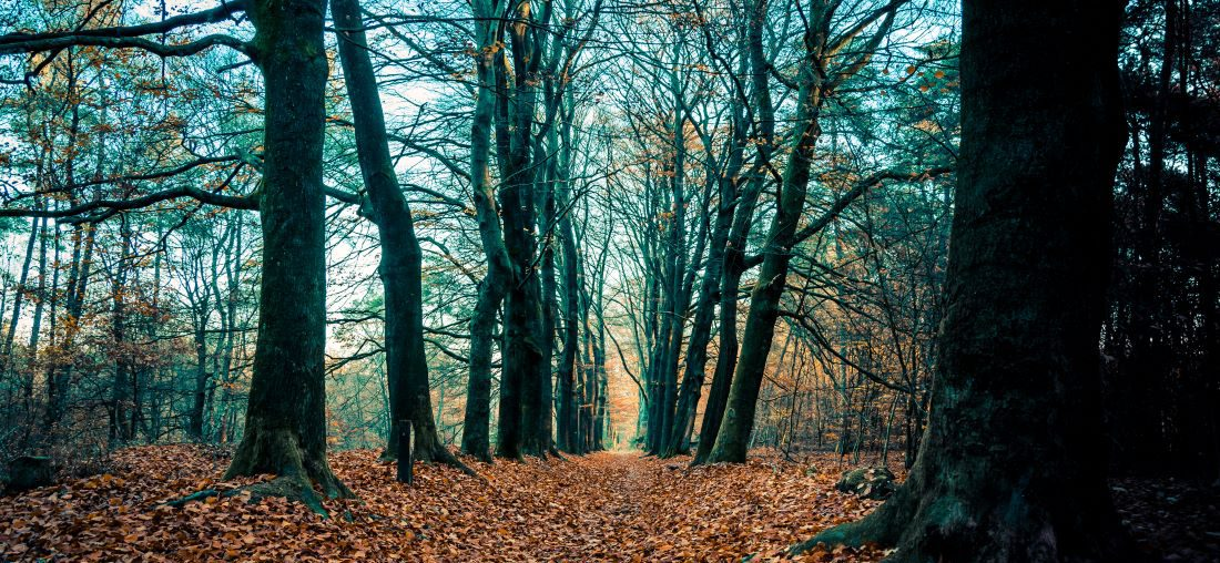 top 3 wandeltrips in montferland