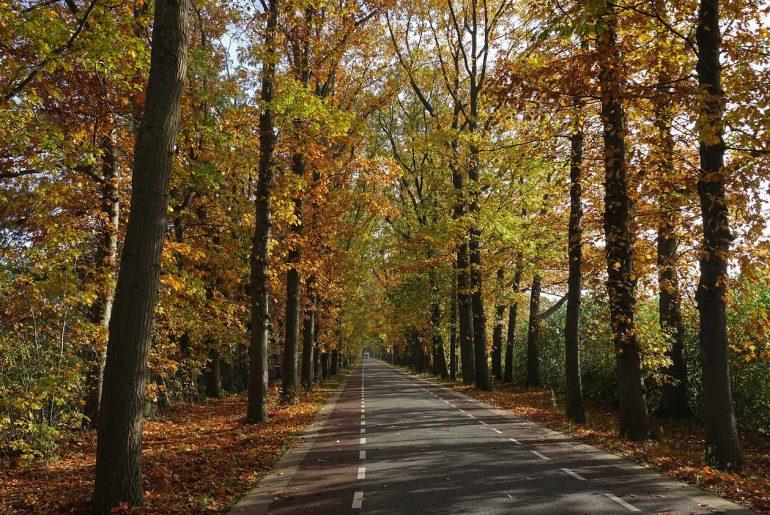 herfstspecial in montferland