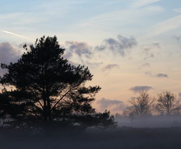 Kersttrips voor gezinnen op de Veluwe – TOP 3